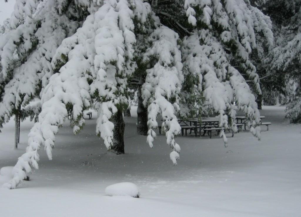 snowy picnic spot