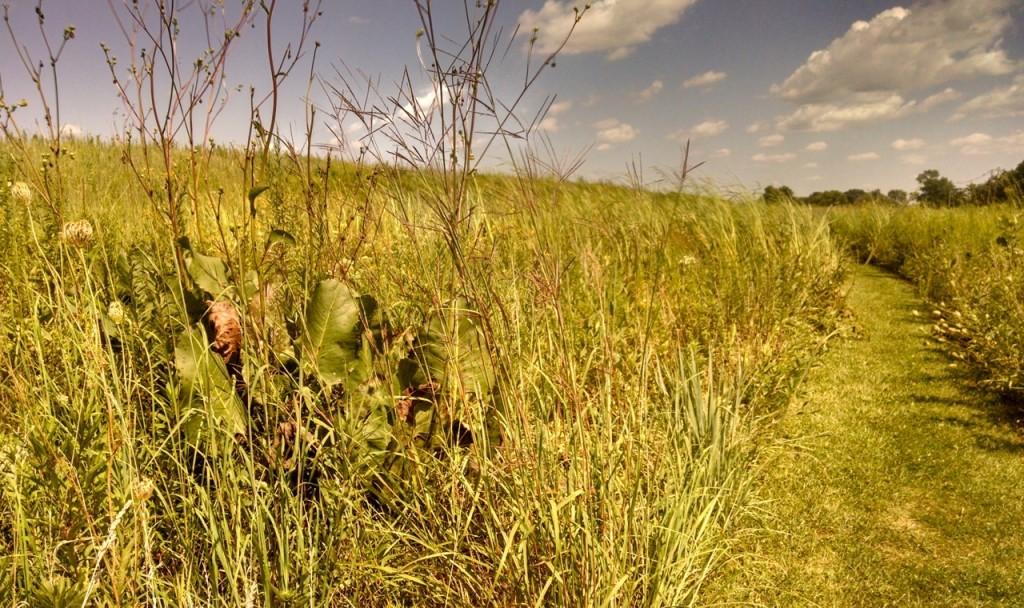 our prairie 2