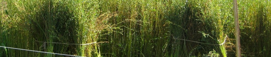 Harvesting flax
