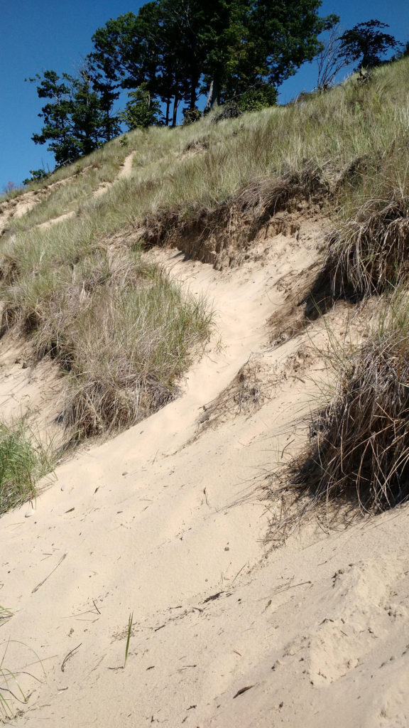 looking up a dune