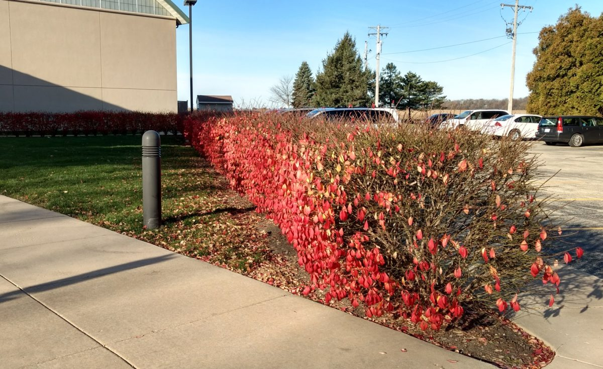 Late autumn hedge